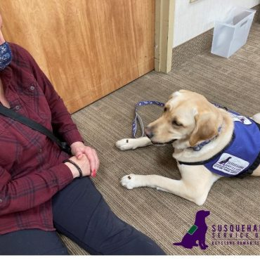 Raising Puppies to Help Veterans: Team Foster's Partnership with Susquehanna Service Dogs